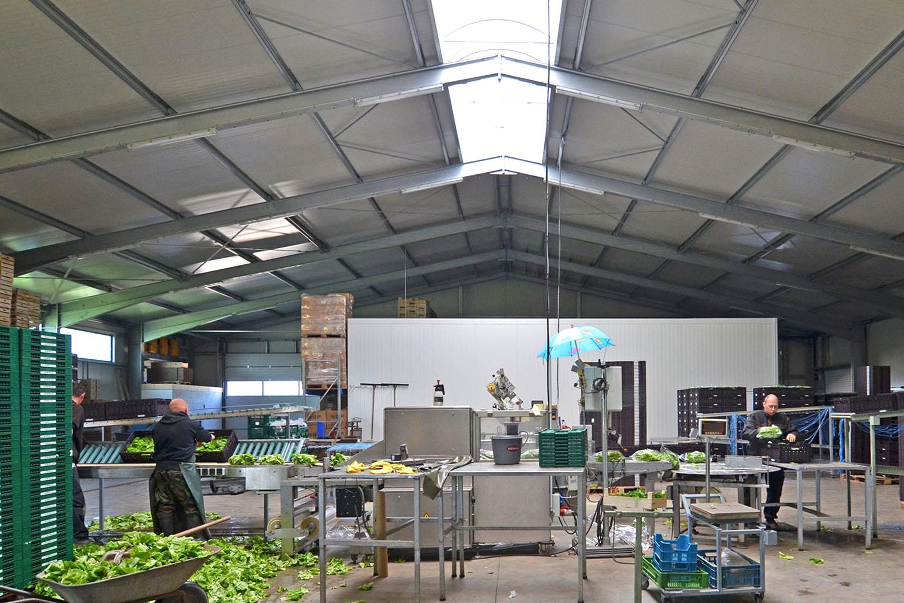 Gemüseverarbeitung in Halle
