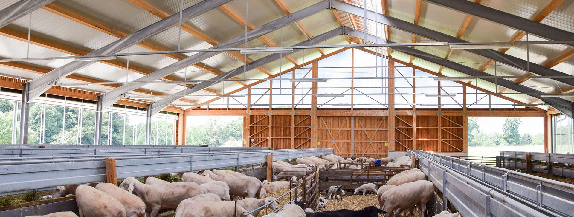 Schafstall mit Stahlrahmen