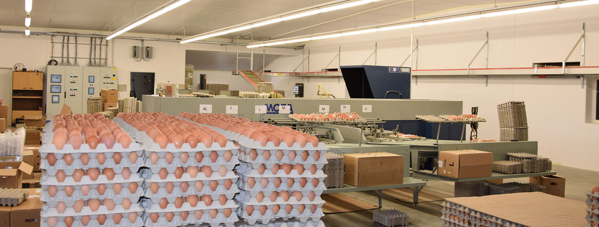 Verpackungsanlage für Eier
