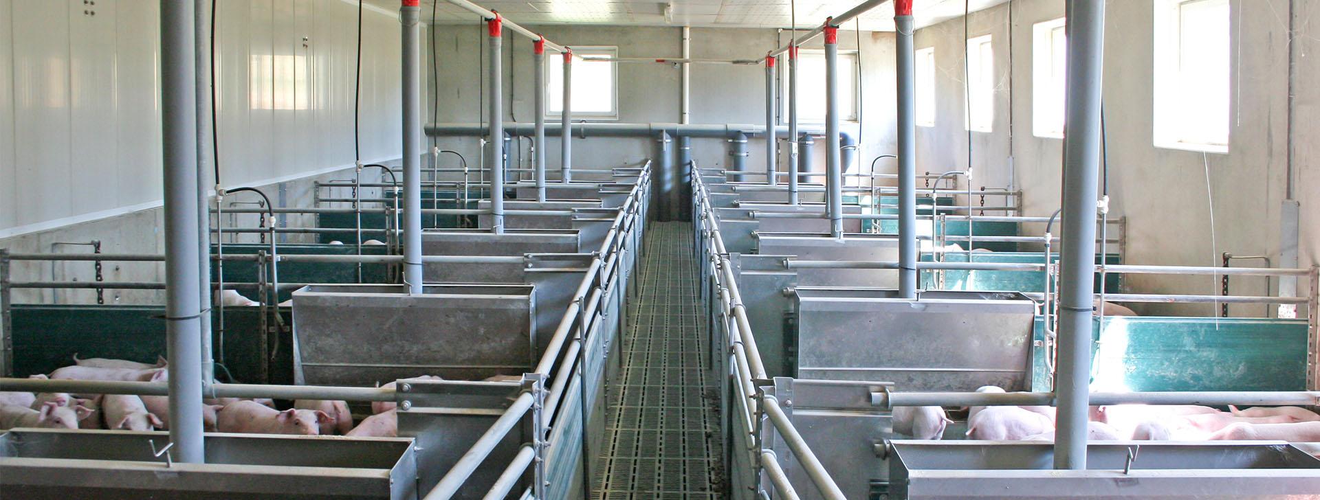 Tierboxen in einem Schweinestall